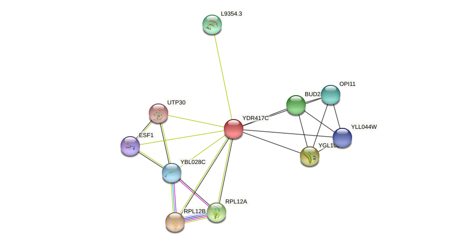 YDR417C protein (Saccharomyces cerevisiae) - STRING interaction network