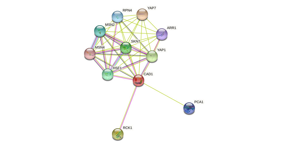 CAD1 protein (Saccharomyces cerevisiae) - STRING interaction network