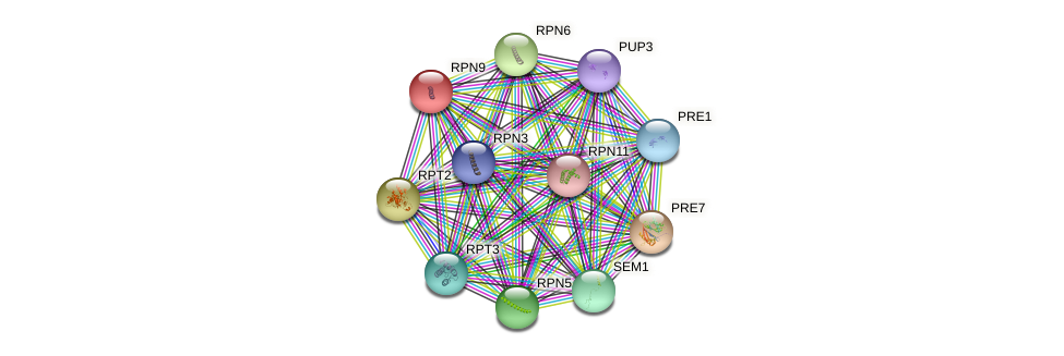 RPN9 protein (Saccharomyces cerevisiae) - STRING interaction network
