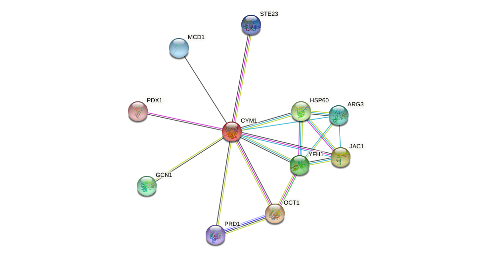 CYM1 protein (Saccharomyces cerevisiae) - STRING interaction network
