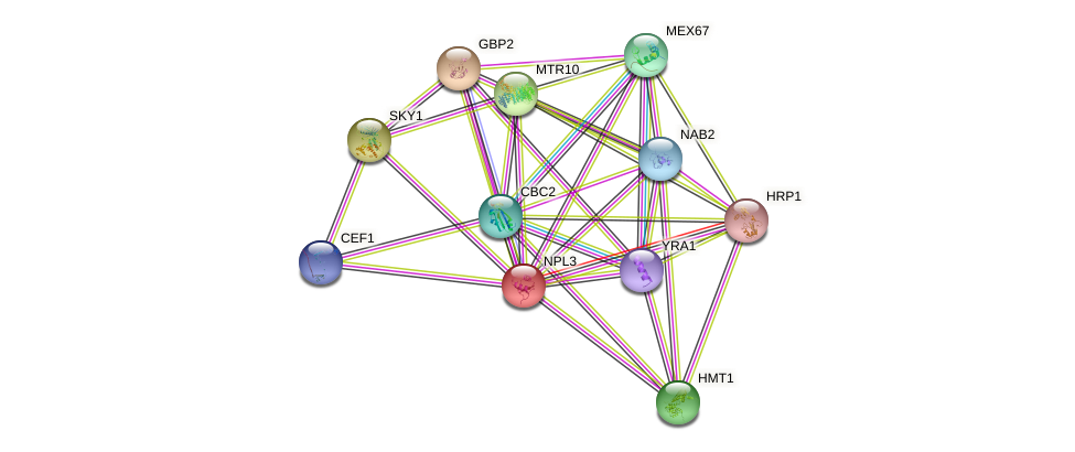 NPL3 protein (Saccharomyces cerevisiae) - STRING interaction network