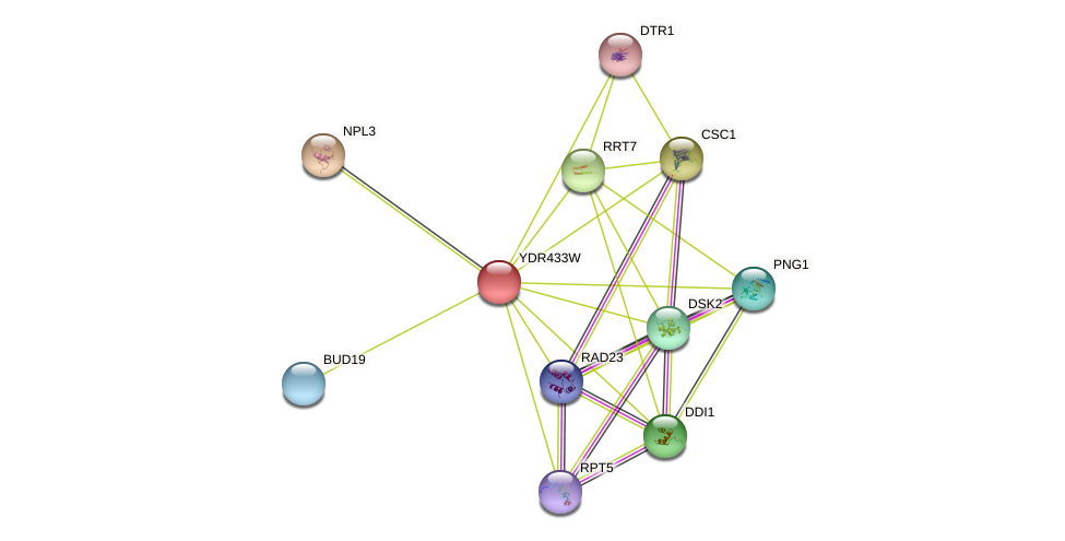YDR433W protein (Saccharomyces cerevisiae) - STRING interaction network