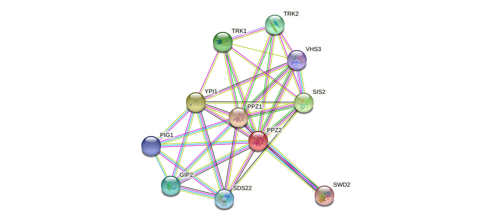 PPZ2 protein (Saccharomyces cerevisiae) - STRING interaction network