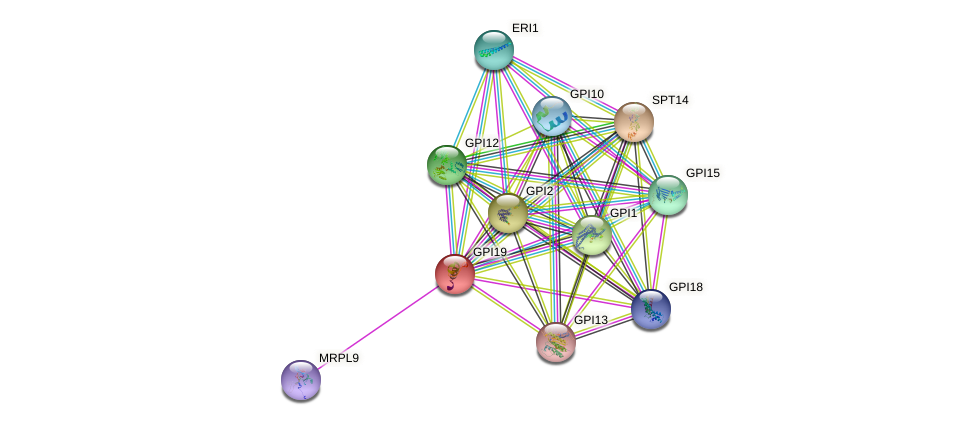 GPI19 protein (Saccharomyces cerevisiae) - STRING interaction network