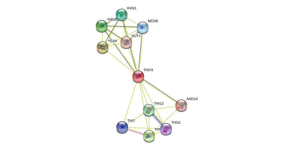 THI74 protein (Saccharomyces cerevisiae) - STRING interaction network