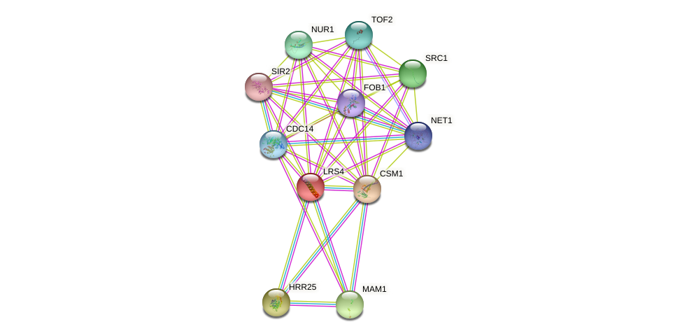 LRS4 protein (Saccharomyces cerevisiae) - STRING interaction network