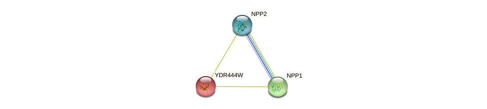 YDR444W protein (Saccharomyces cerevisiae) - STRING interaction network
