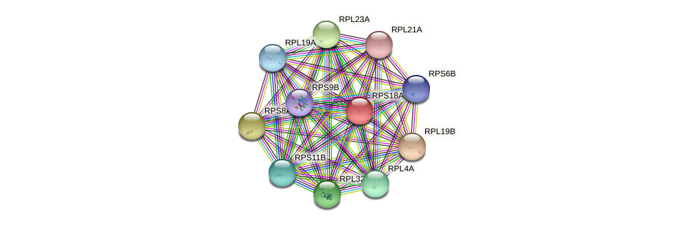 RPS18A protein (Saccharomyces cerevisiae) - STRING interaction network