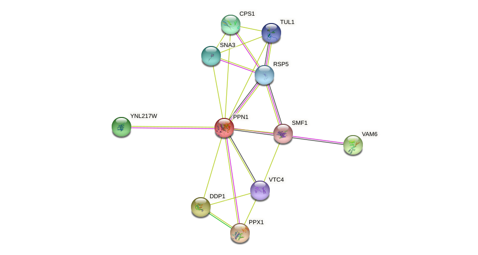 PPN1 protein (Saccharomyces cerevisiae) - STRING interaction network
