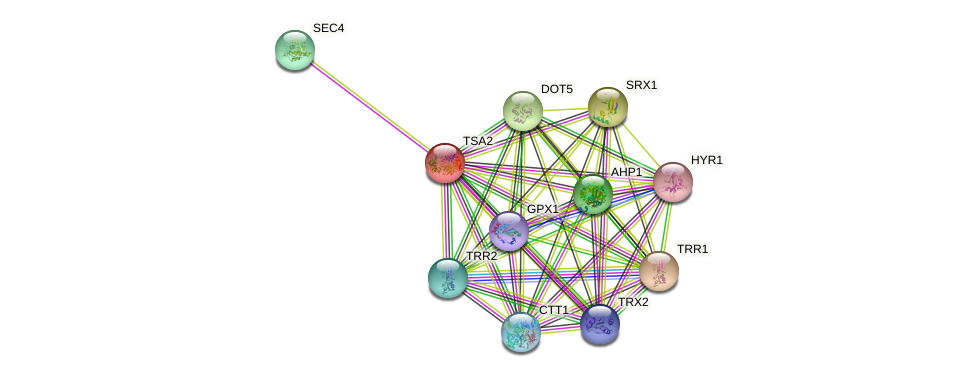 TSA2 protein (Saccharomyces cerevisiae) - STRING interaction network