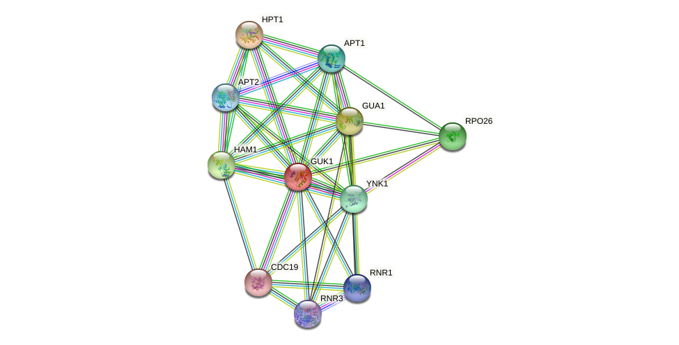 GUK1 protein (Saccharomyces cerevisiae) - STRING interaction network