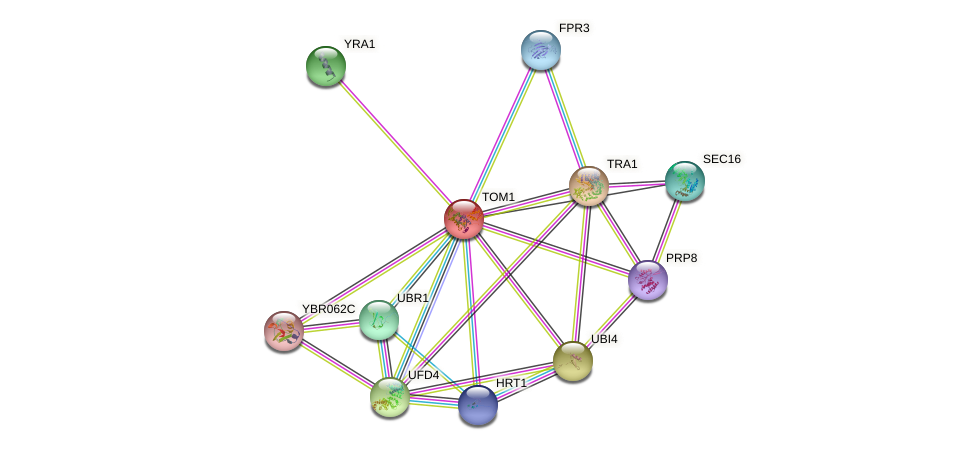 TOM1 protein (Saccharomyces cerevisiae) - STRING interaction network