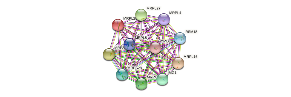 MRPL28 protein (Saccharomyces cerevisiae) - STRING interaction network