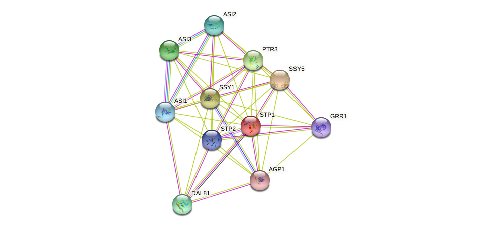 STP1 protein (Saccharomyces cerevisiae) - STRING interaction network