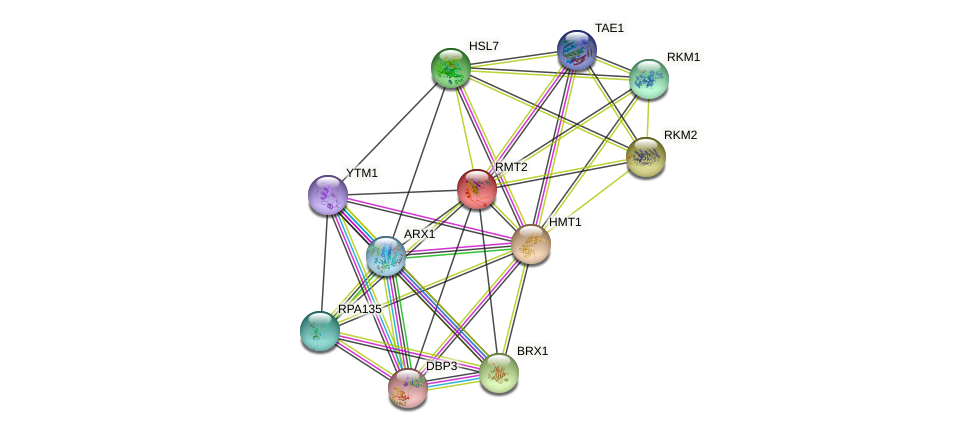 RMT2 protein (Saccharomyces cerevisiae) - STRING interaction network