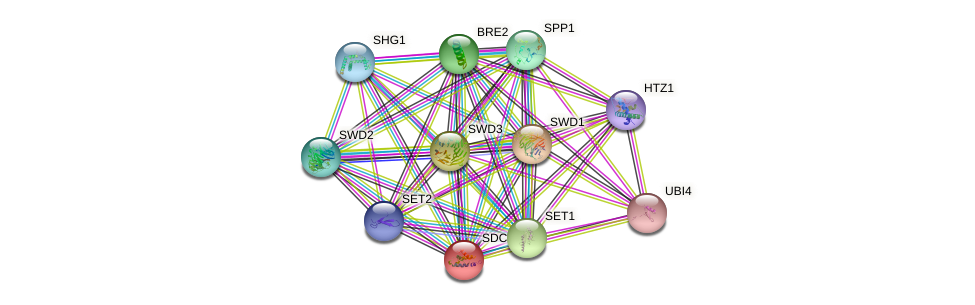 SDC1 protein (Saccharomyces cerevisiae) - STRING interaction network