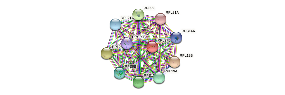 RPL27B protein (Saccharomyces cerevisiae) - STRING interaction network