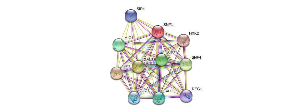 SNF1 protein (Saccharomyces cerevisiae) - STRING interaction network
