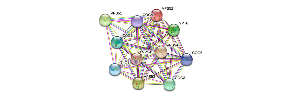 VPS52 protein (Saccharomyces cerevisiae) - STRING interaction network