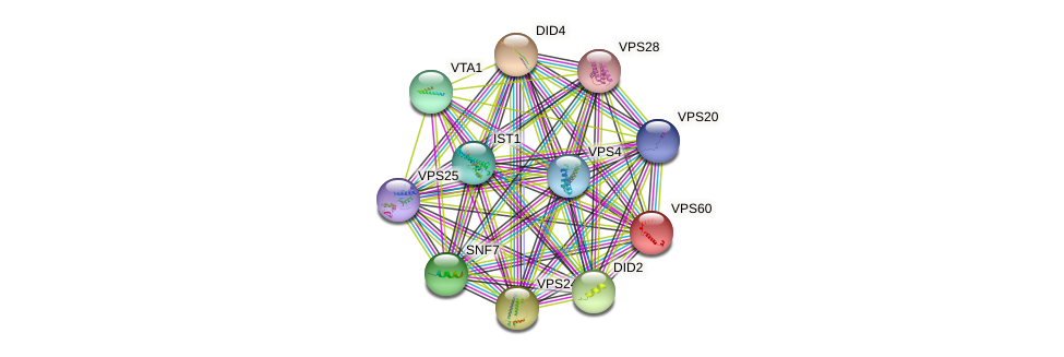 VPS60 protein (Saccharomyces cerevisiae) - STRING interaction network