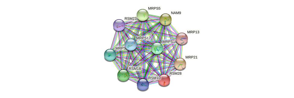 RSM28 protein (Saccharomyces cerevisiae) - STRING interaction network