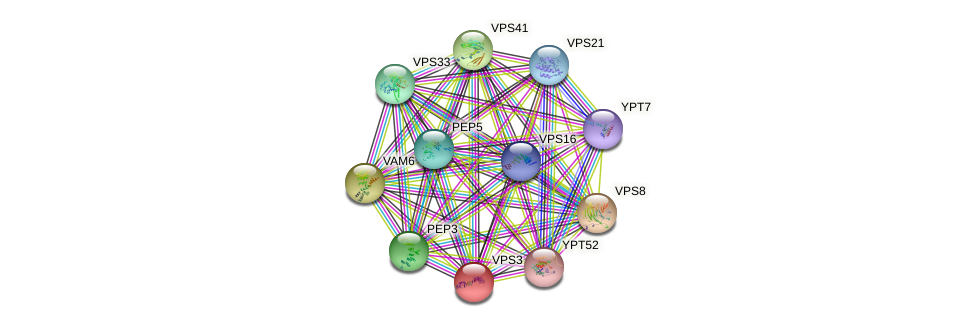 VPS3 protein (Saccharomyces cerevisiae) - STRING interaction network