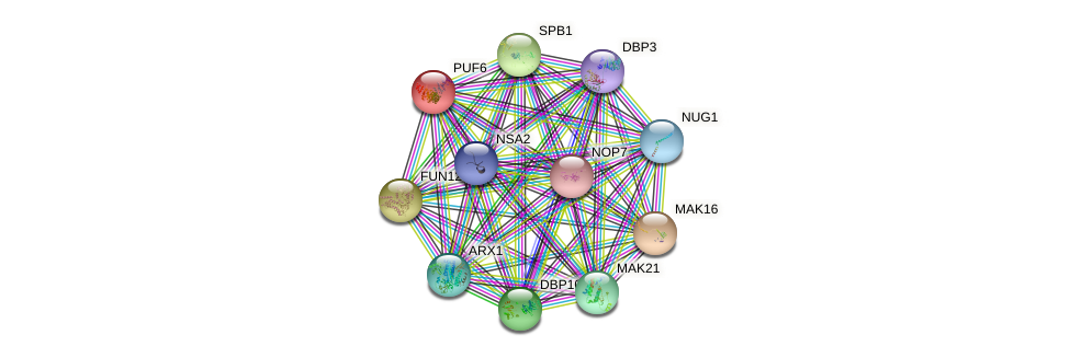 PUF6 protein (Saccharomyces cerevisiae) - STRING interaction network