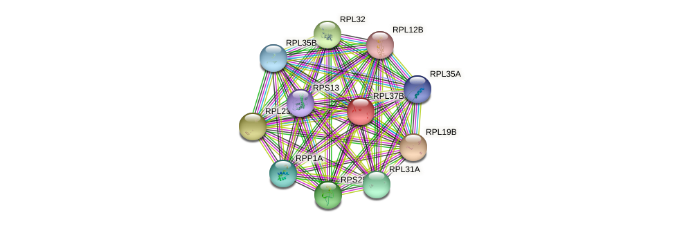 RPL37B protein (Saccharomyces cerevisiae) - STRING interaction network