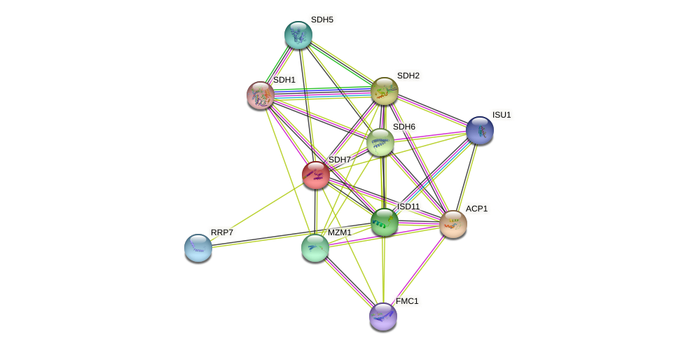 SDH7 protein (Saccharomyces cerevisiae) - STRING interaction network