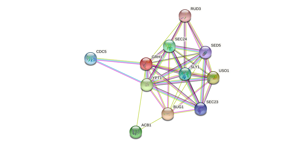 GRH1 protein (Saccharomyces cerevisiae) - STRING interaction network