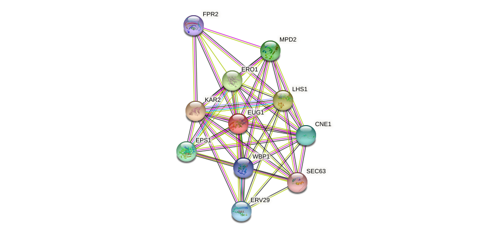 EUG1 protein (Saccharomyces cerevisiae) - STRING interaction network