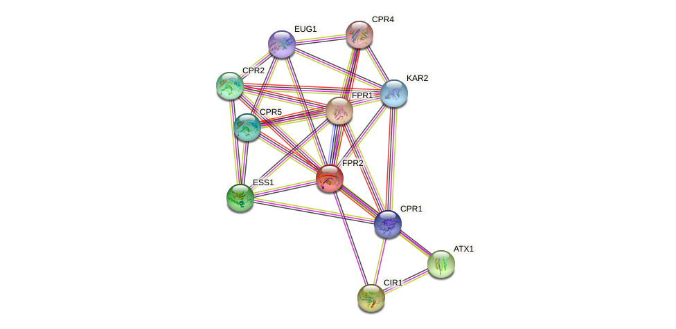 FPR2 protein (Saccharomyces cerevisiae) - STRING interaction network