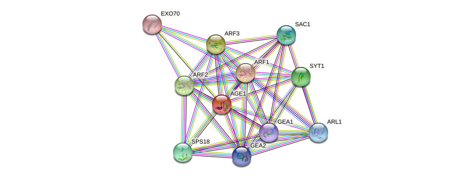 AGE1 protein (Saccharomyces cerevisiae) - STRING interaction network