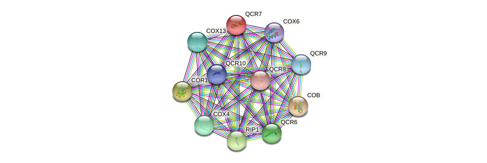 QCR7 protein (Saccharomyces cerevisiae) - STRING interaction network