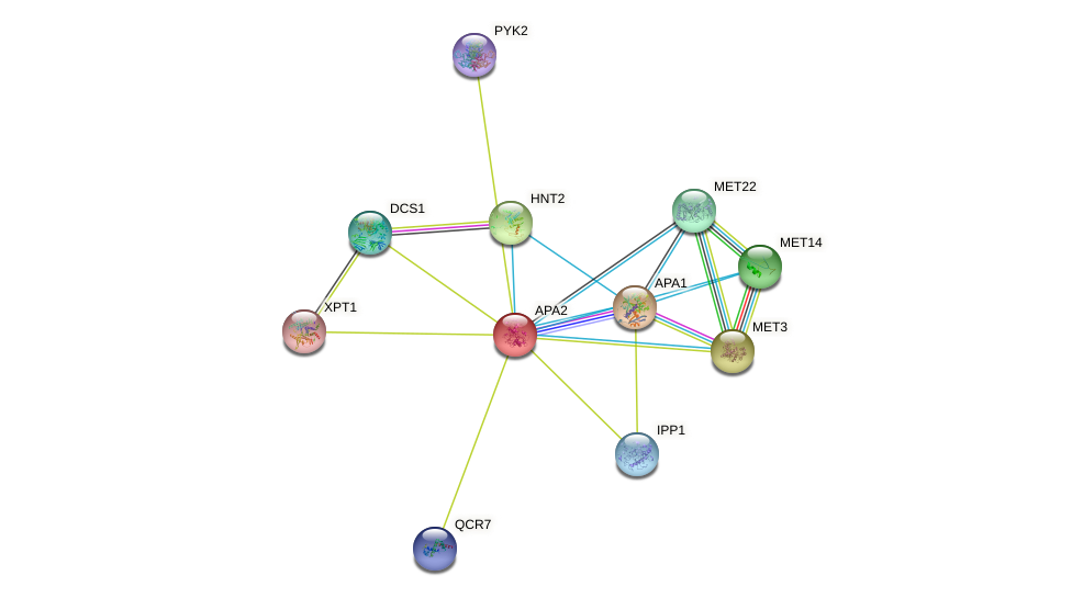 APA2 protein (Saccharomyces cerevisiae) - STRING interaction network