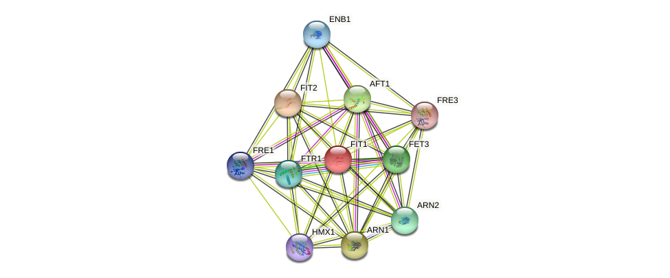 FIT1 protein (Saccharomyces cerevisiae) - STRING interaction network