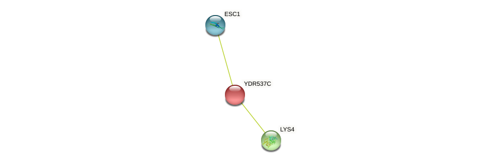 YDR537C protein (Saccharomyces cerevisiae) - STRING interaction network