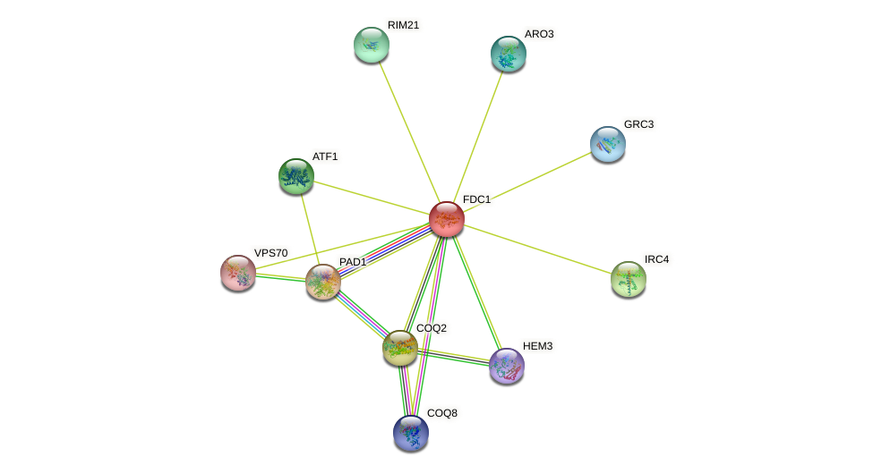 FDC1 protein (Saccharomyces cerevisiae) - STRING interaction network