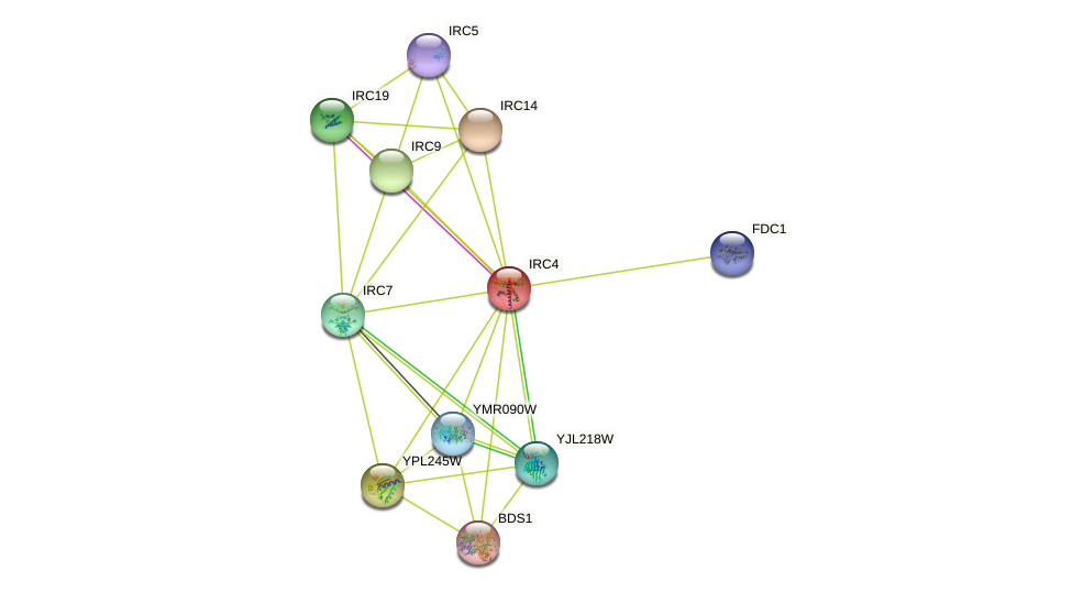 IRC4 protein (Saccharomyces cerevisiae) - STRING interaction network