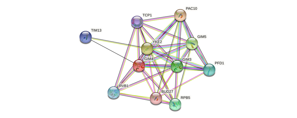GIM4 protein (Saccharomyces cerevisiae) - STRING interaction network