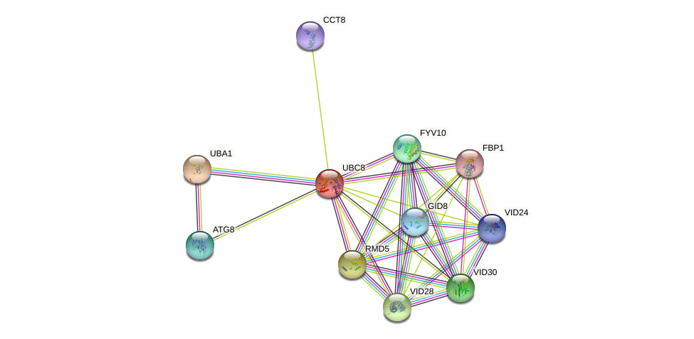 UBC8 protein (Saccharomyces cerevisiae) - STRING interaction network