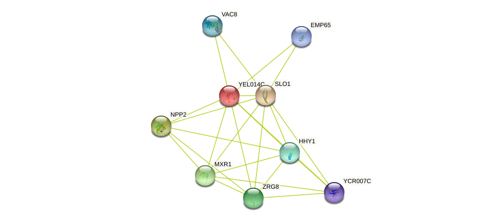 YEL014C protein (Saccharomyces cerevisiae) - STRING interaction network
