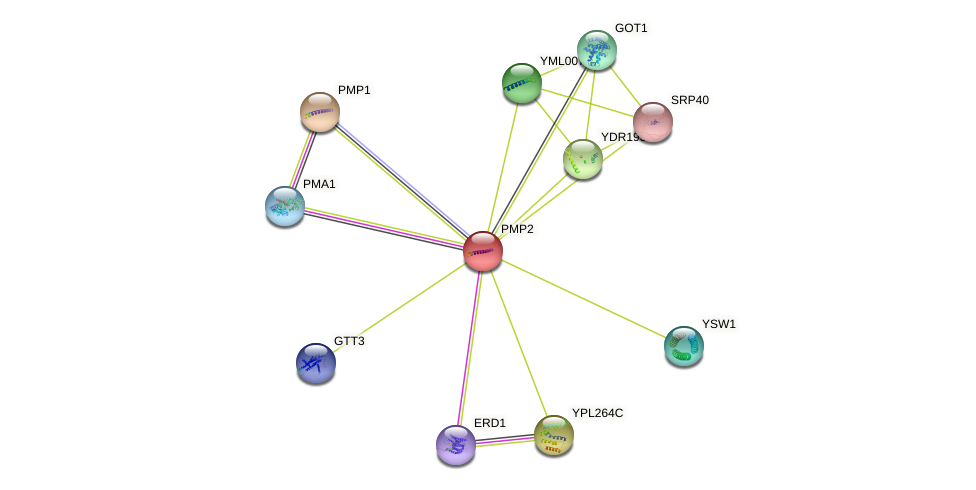 PMP2 protein (Saccharomyces cerevisiae) - STRING interaction network
