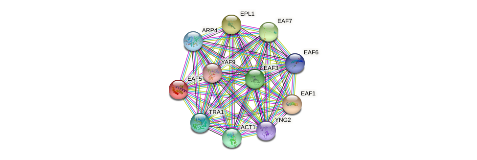 EAF5 protein (Saccharomyces cerevisiae) - STRING interaction network