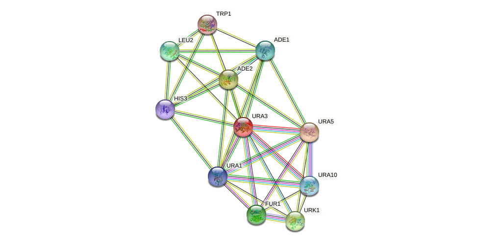 URA3 protein (Saccharomyces cerevisiae) - STRING interaction network