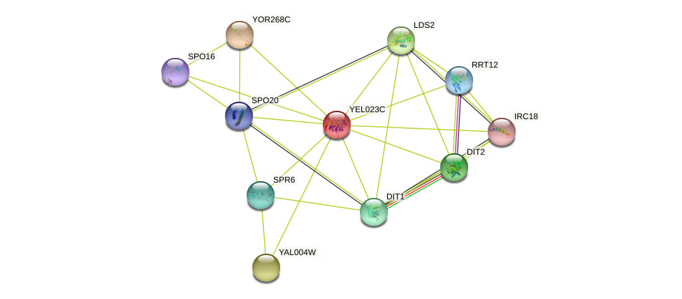 YEL023C protein (Saccharomyces cerevisiae) - STRING interaction network