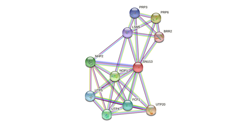 SNU13 protein (Saccharomyces cerevisiae) - STRING interaction network