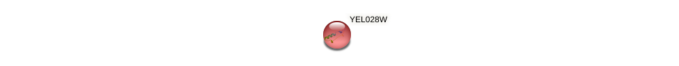 YEL028W protein (Saccharomyces cerevisiae) - STRING interaction network