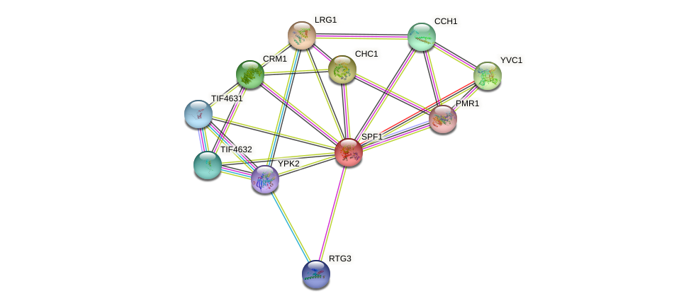 SPF1 protein (Saccharomyces cerevisiae) - STRING interaction network
