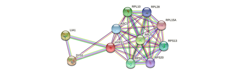 HYP2 protein (Saccharomyces cerevisiae) - STRING interaction network